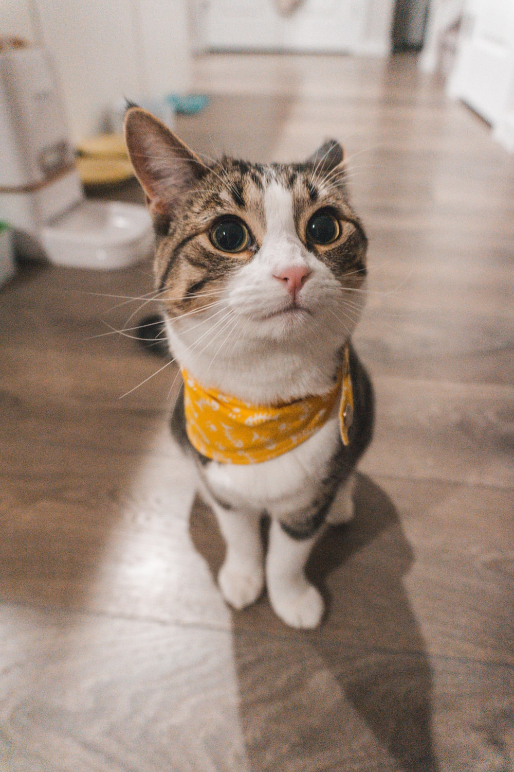white black and brown cat wearing yellow and white scarf