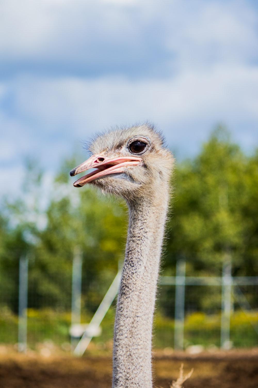 ostrich head in tilt shift lens