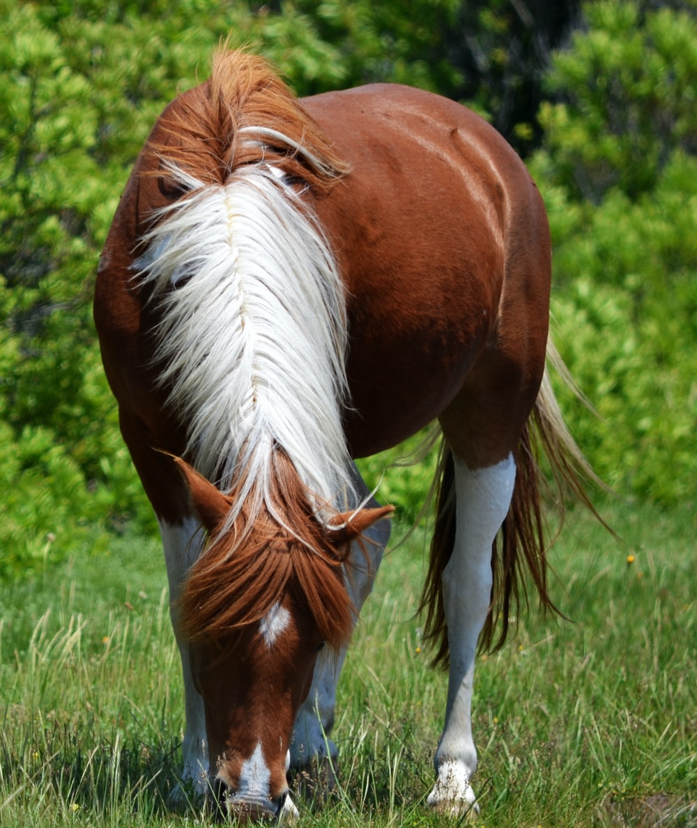 brown and white horse on green grass field during daytime