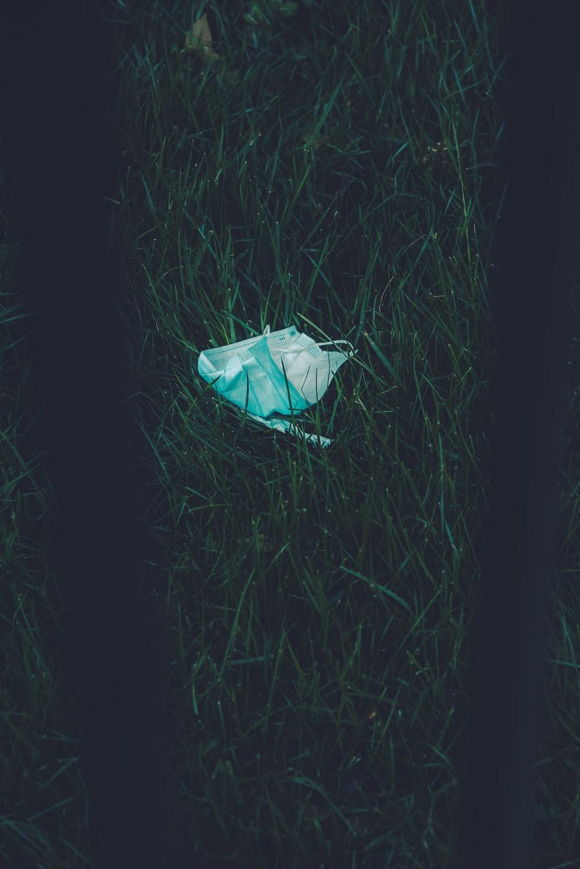 white plastic bag on green grass