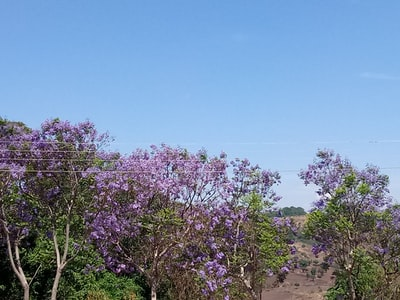 purple flowers on brown sand during daytime malawi teams background