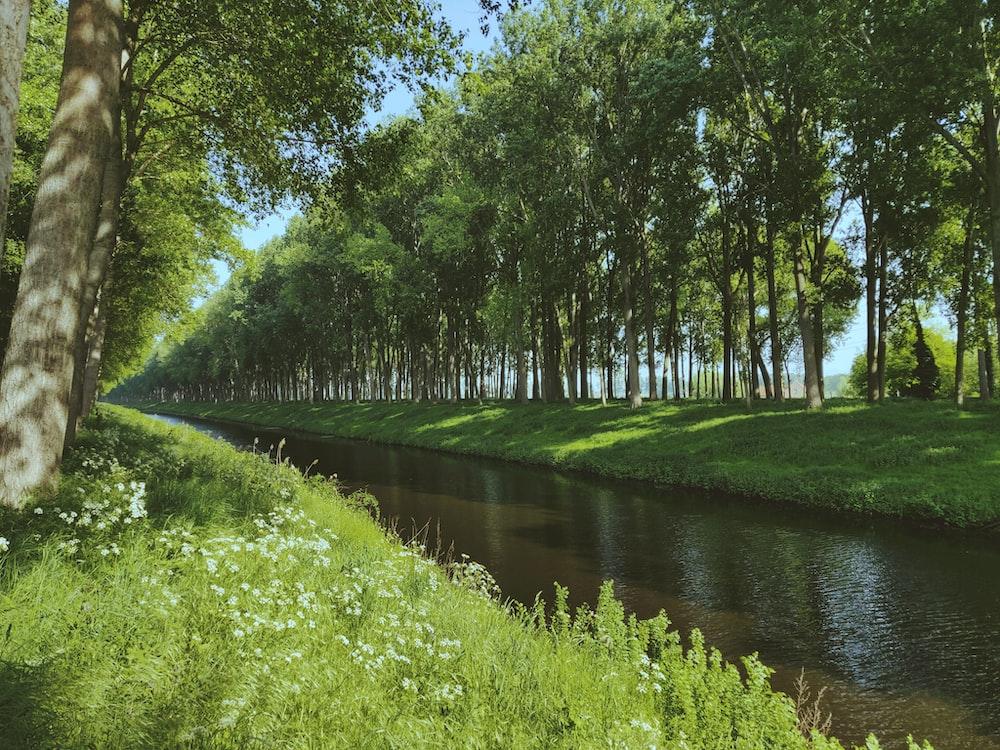 green grass field near river