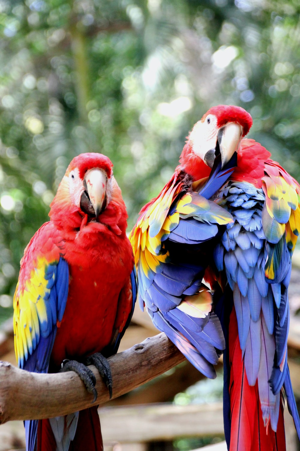 red yellow blue and green macaw