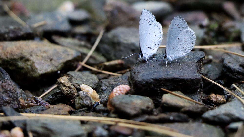 grey butterfly on grey and brown stones