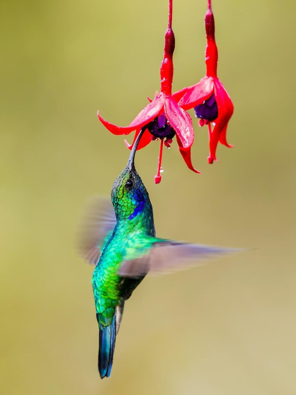 green and black humming bird flying