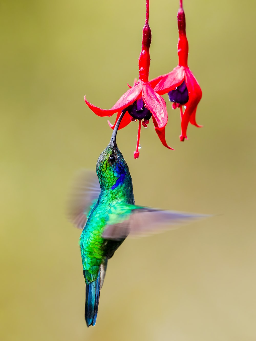 350+ Hummingbird Pictures [HD] | Download Free Images on Unsplash