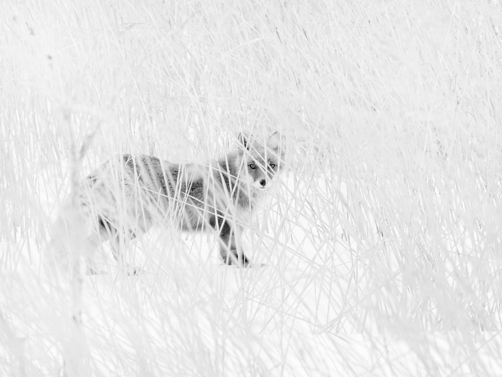 white fox on snow covered ground