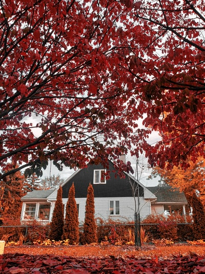 red and brown tree near white and brown house