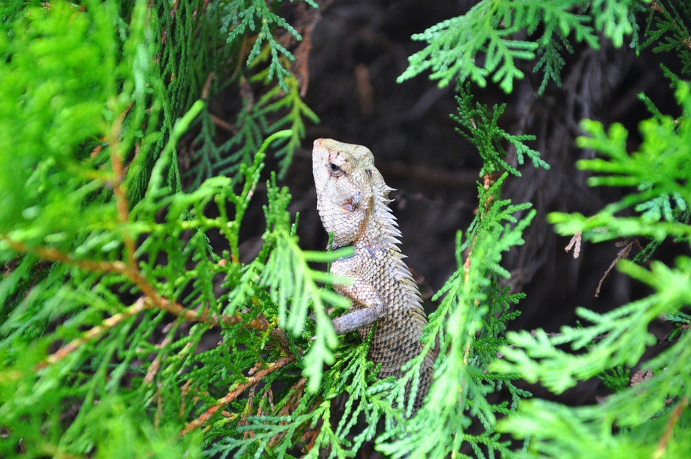 green and brown bearded dragon on green grass