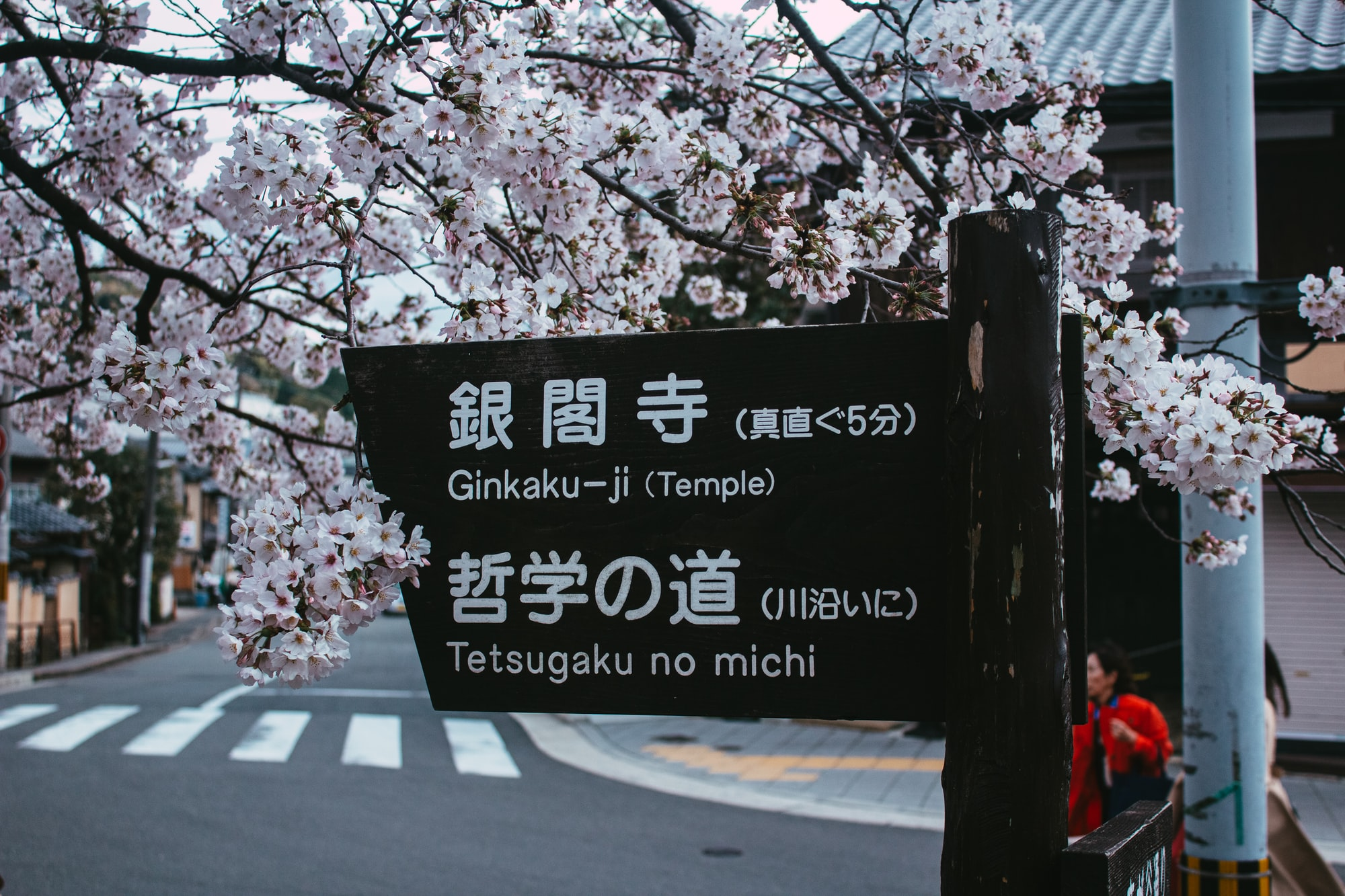 Sakura time in Kyoto.