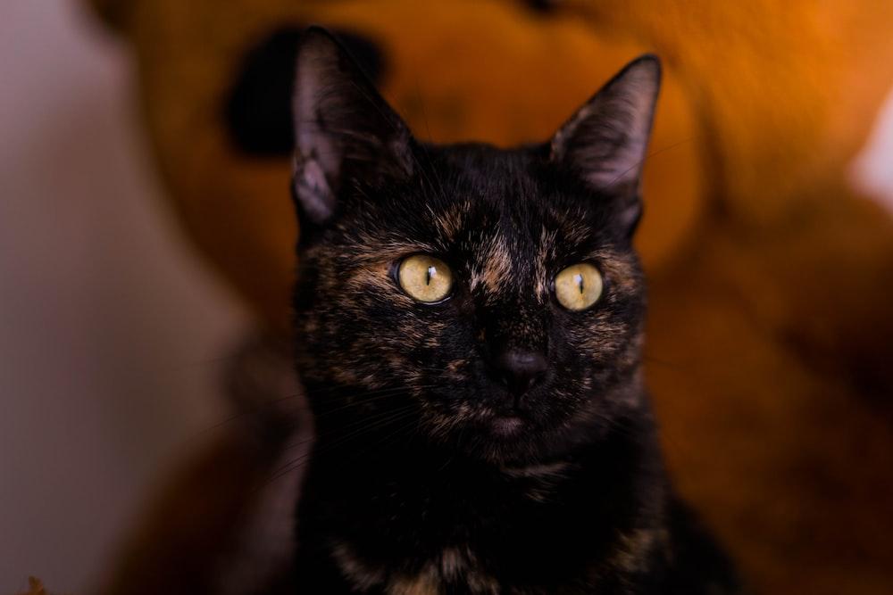 black cat in tilt shift lens