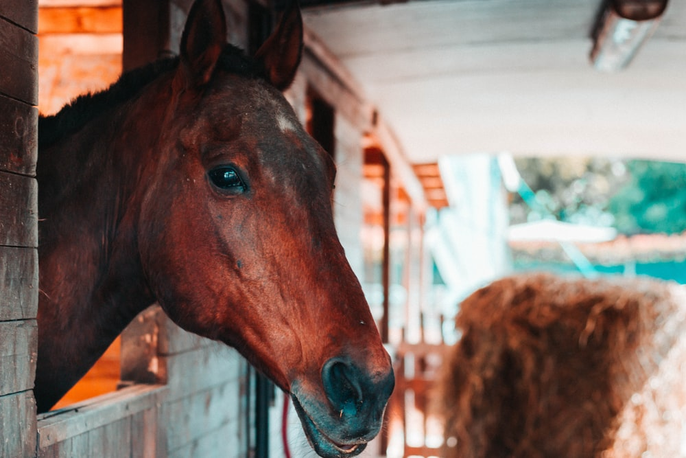 brown horse in a cage