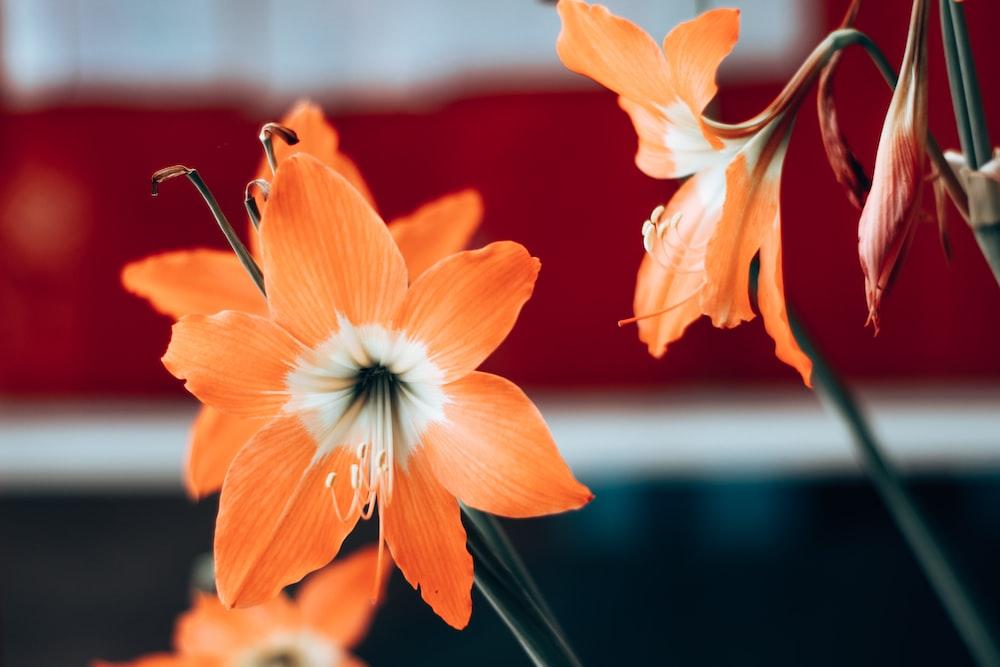 orange and white flower in tilt shift lens