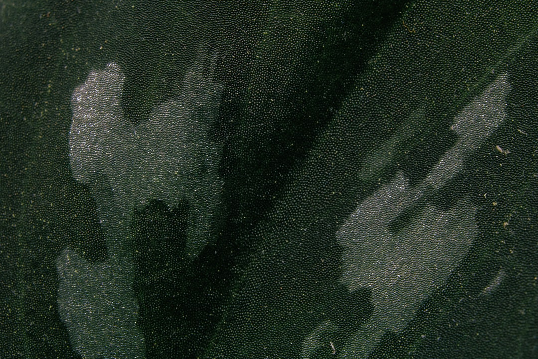 House plant texture.