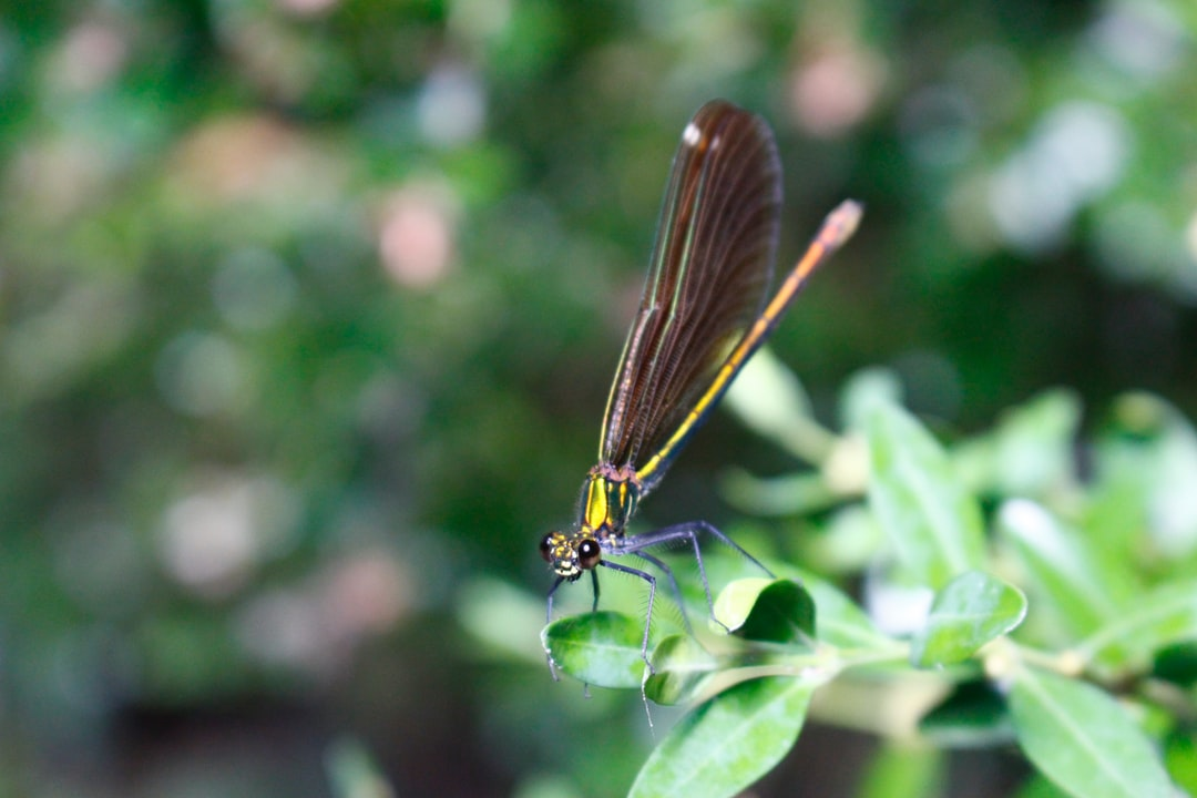 A Dragonfly In France