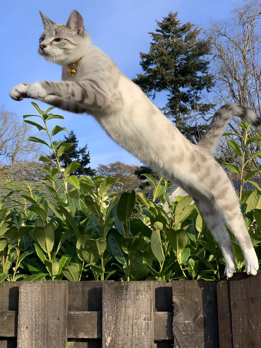 white cat on brown wooden fence during daytime