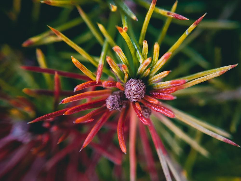 brown and black flower in macro shot