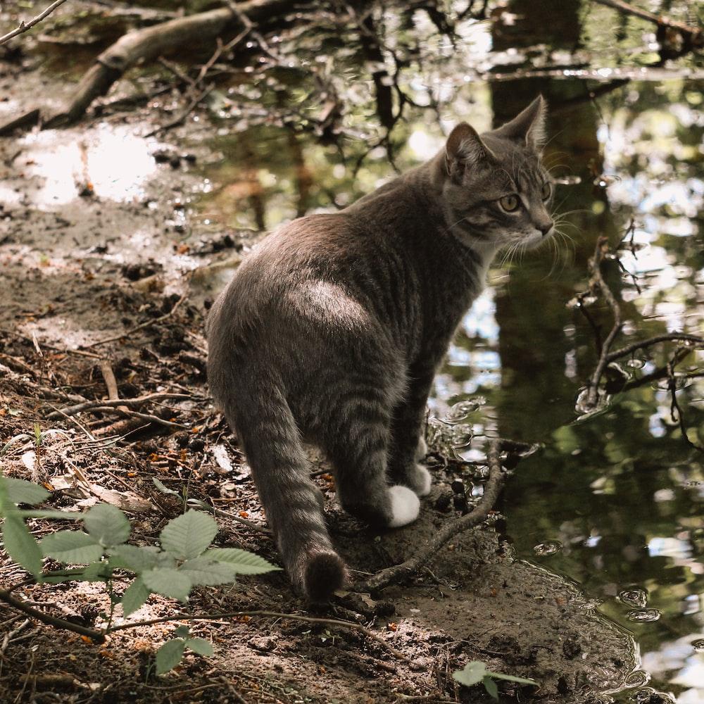 brown tabby cat on brown tree trunk