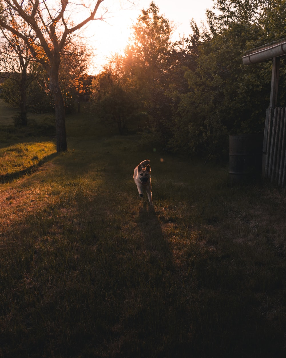 brown and white short coated dog on green grass field during sunset