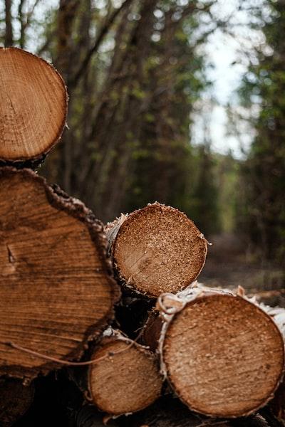 brown tree log in tilt shift lens