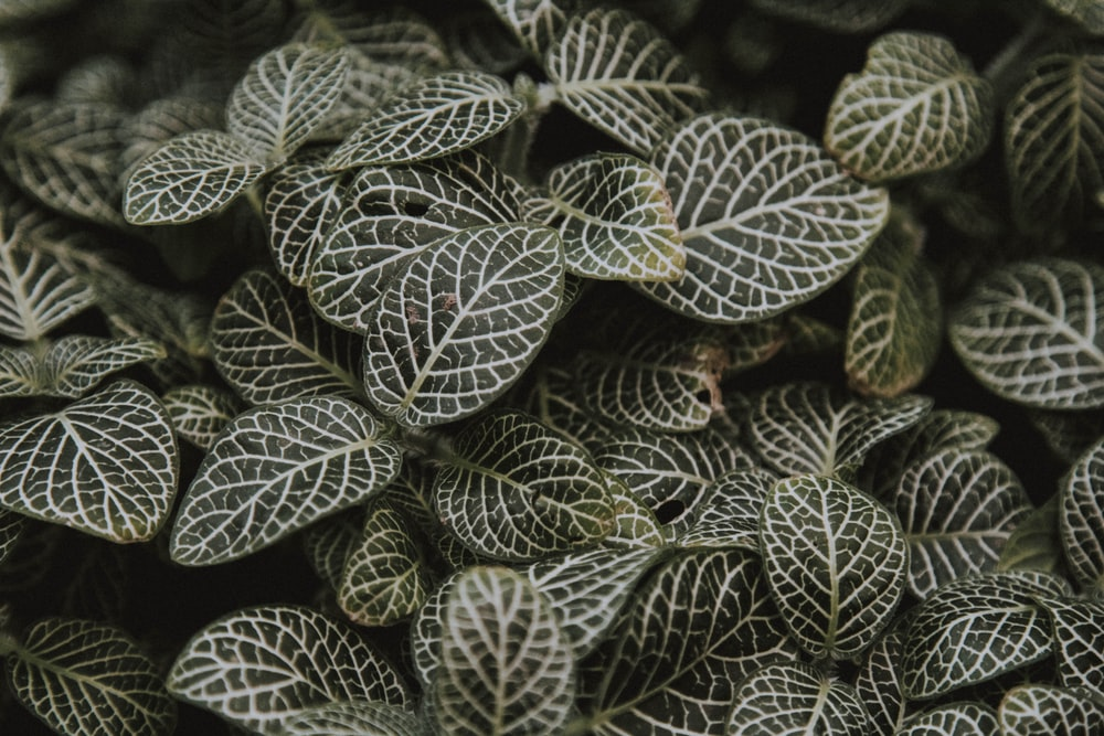 green and brown leaves in close up photography
