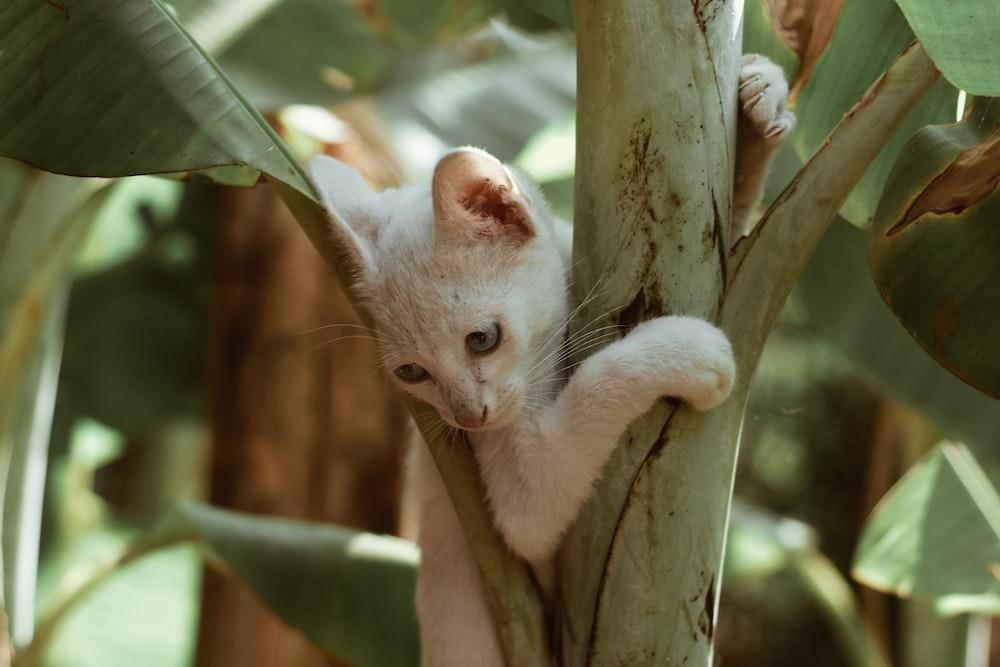 white cat on tree branch