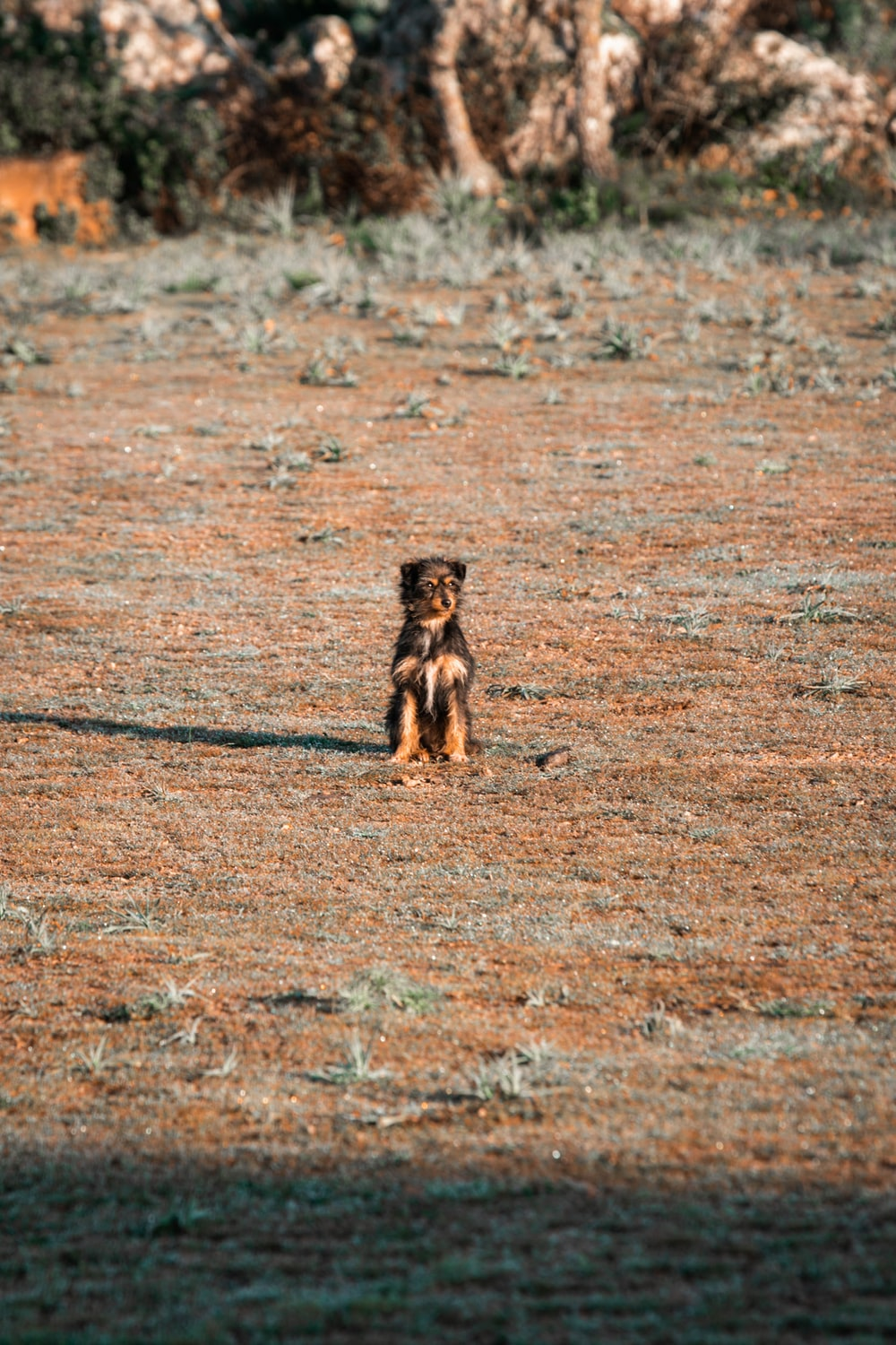 brown short coated small dog on brown field during daytime