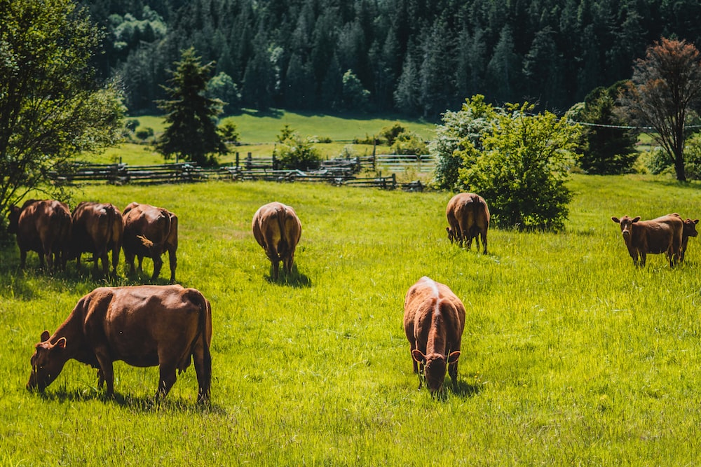 herd of horses on green grass field during daytime