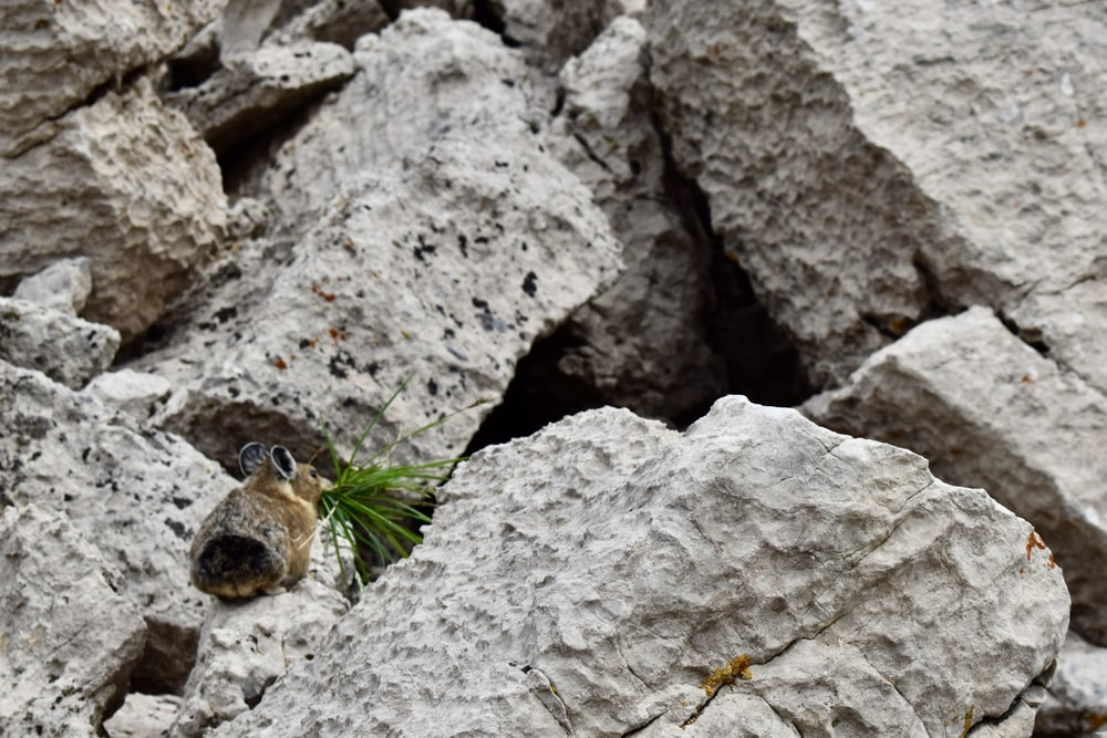 brown rabbit on gray rock