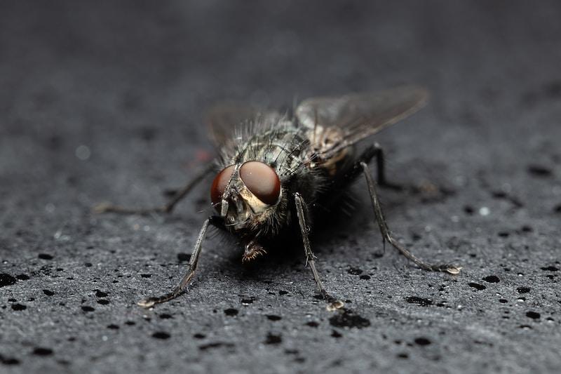 black fly on grey textile