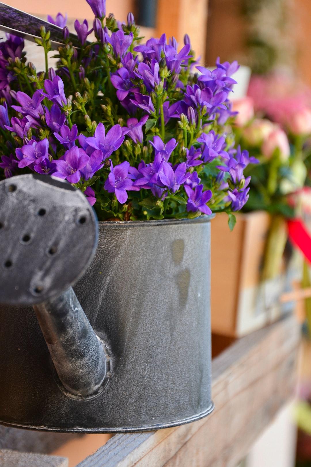 Purple flowers inside a watering can