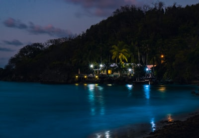 green palm trees near body of water during night time barbados teams background