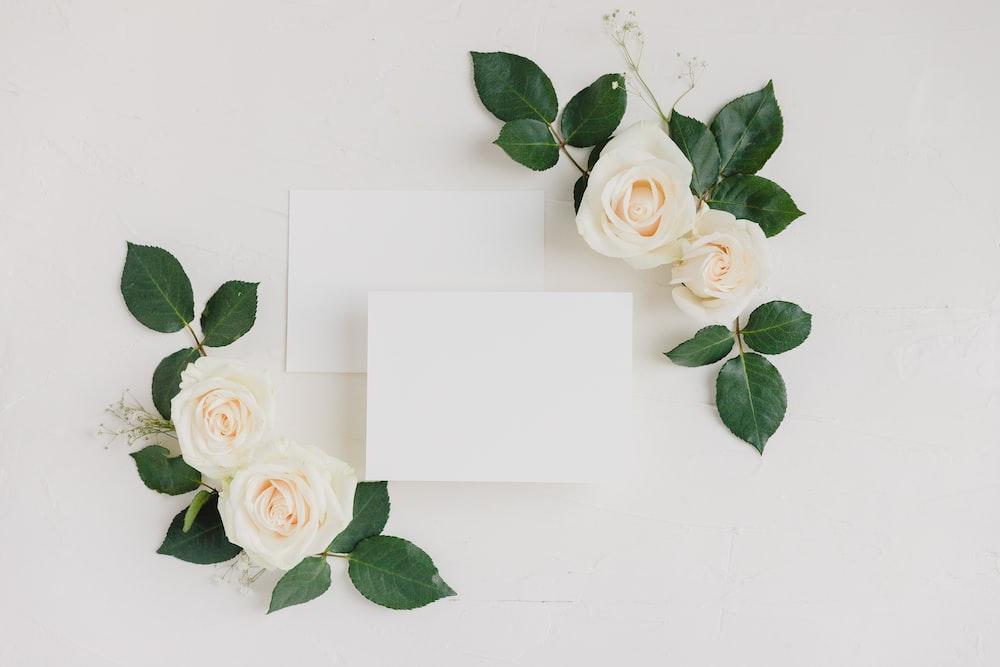 white rose on white paper