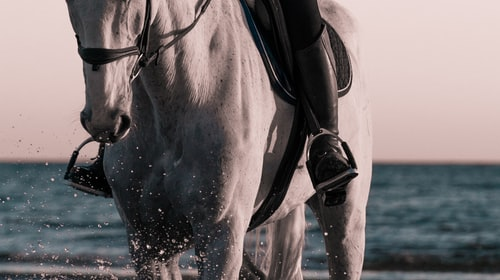 How Horseback Riding Keeps Me Active