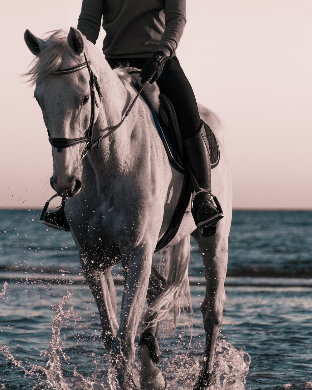 person riding on white horse on beach during daytime