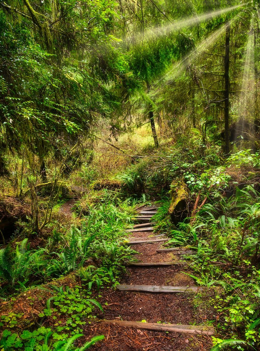 brown wooden pathway between green trees