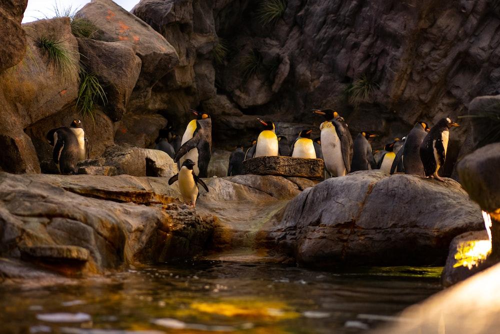 penguins on rock near river during daytime