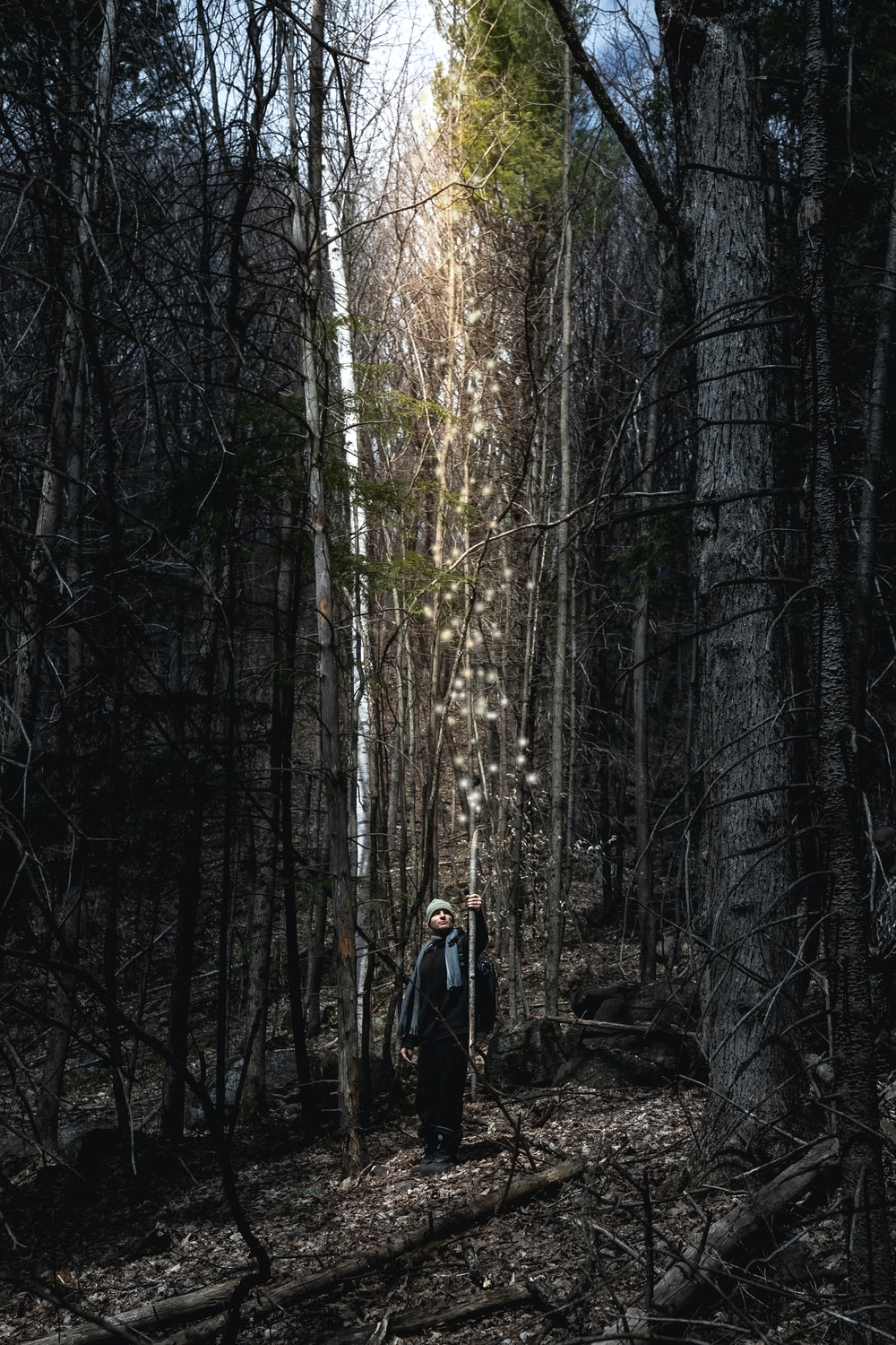 person in black jacket standing in the middle of the woods