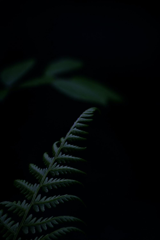 green leaf plant in dark room