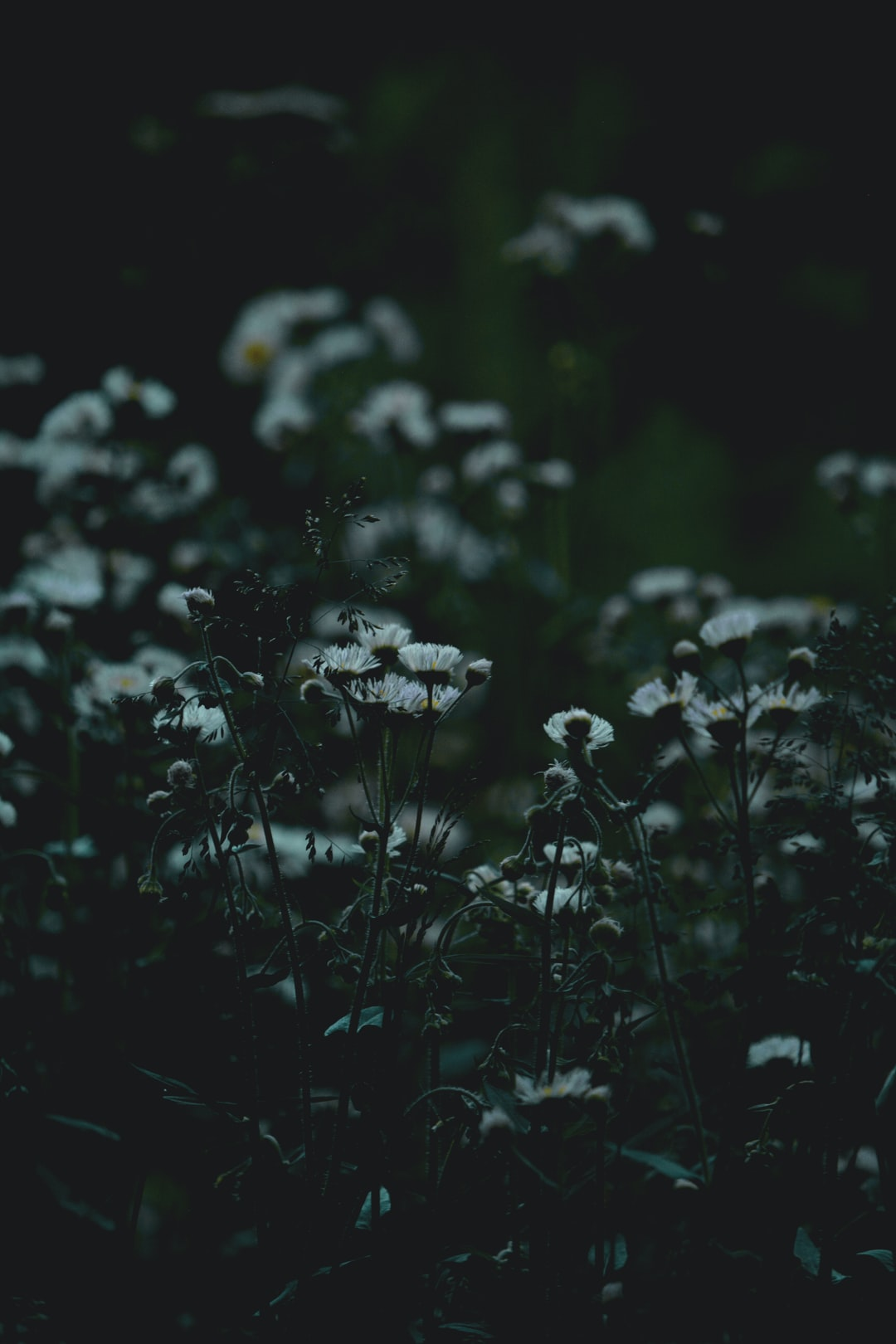 A secret garden with white wildflowers at dusk