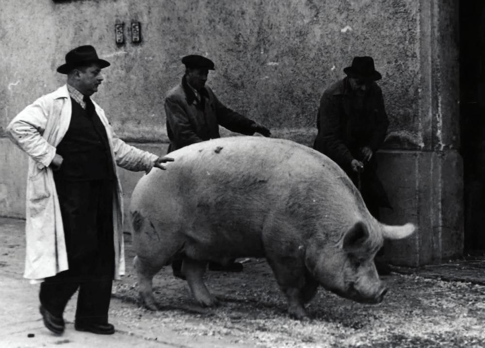 man in black jacket standing beside pig