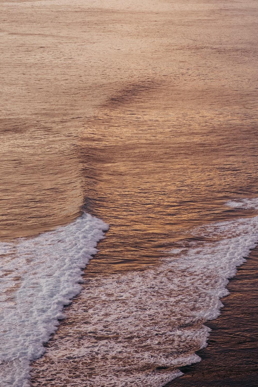 brown and white sand beach