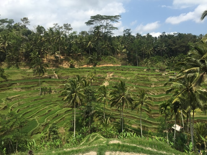 Tegallalang rice terraces, Best Places to Visit in Bali