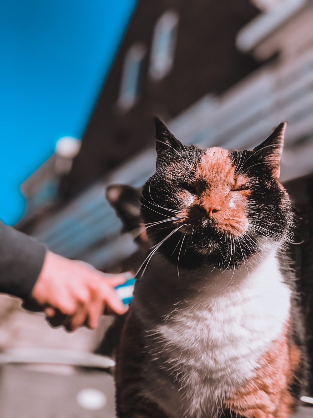 person holding white and black cat