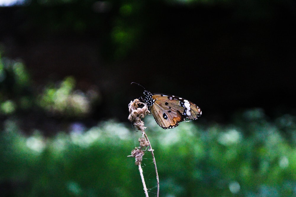 brown and black butterfly perched on white flower in close up photography during daytime