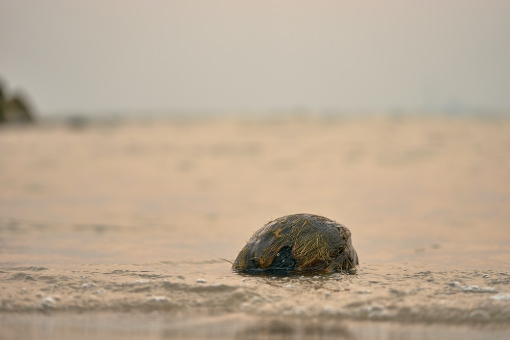 brown and black turtle on brown sand during daytime