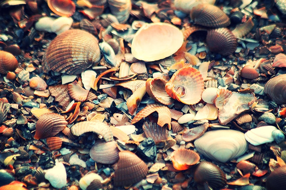brown and white seashells on the ground