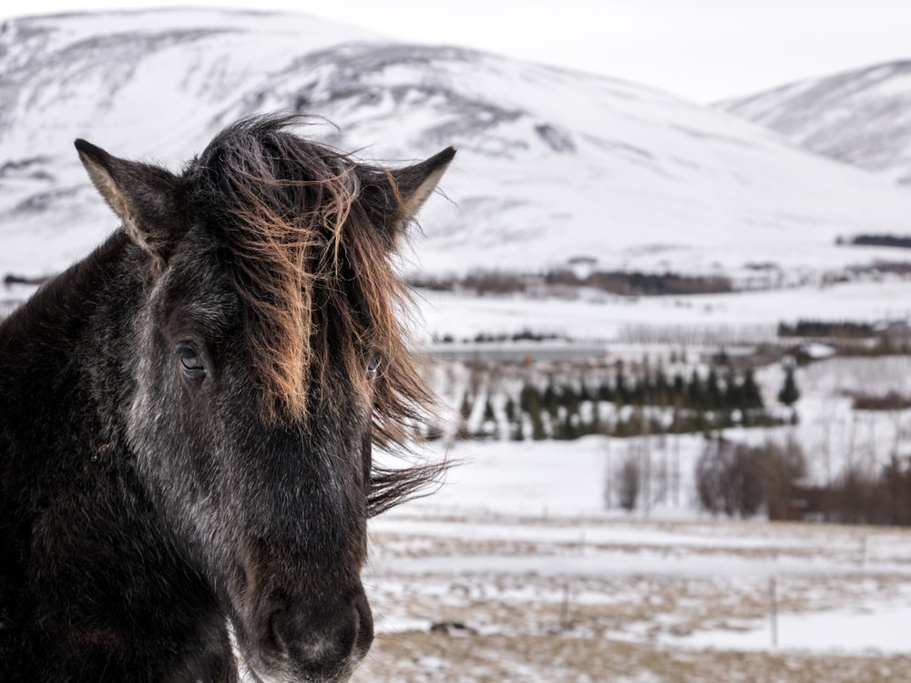 black horse on snow covered ground during daytime