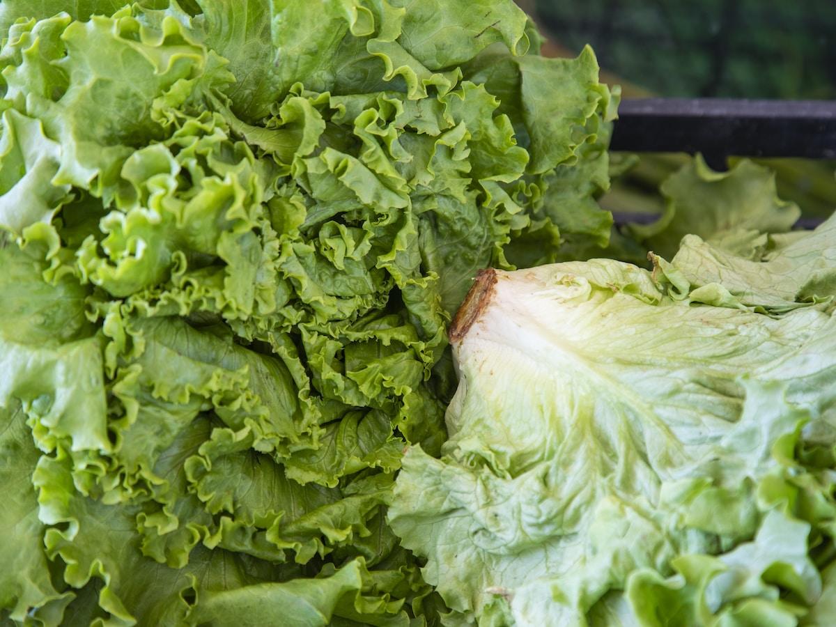 bulos TikTok, lechuga, green lettuce on black metal grill