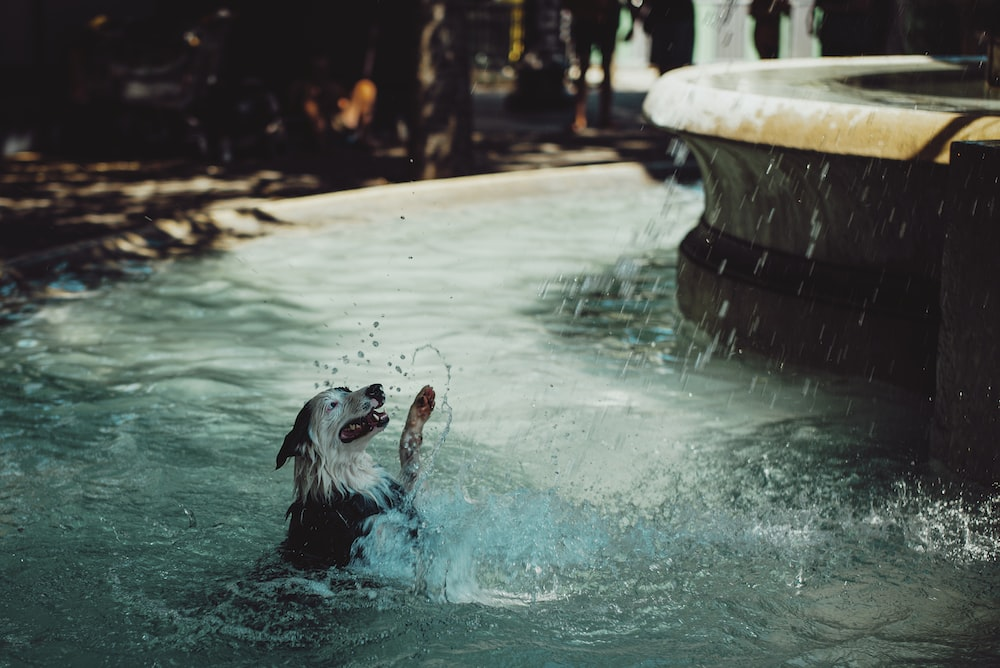 white and black short coated dog in water fountain during daytime